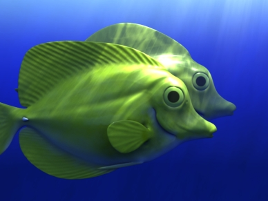 Yellow Tang sculpted and textured in zBrush. February 2006.