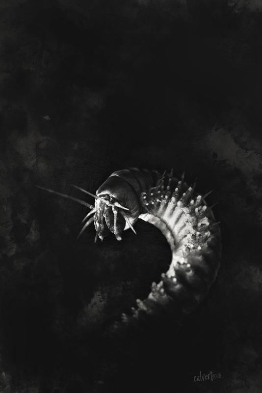 worm-black